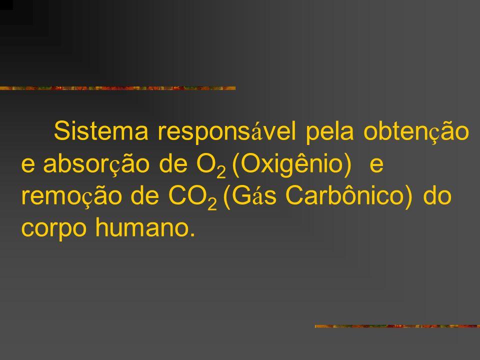 Sistema responsável pela obtenção e absorção de O2 (Oxigênio) e remoção de CO2 (Gás Carbônico) do corpo humano.