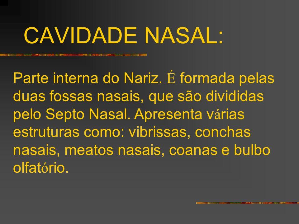 CAVIDADE NASAL: