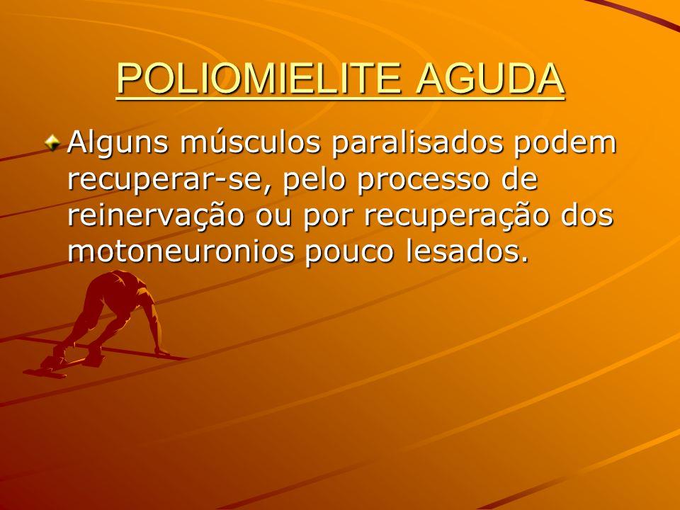 POLIOMIELITE AGUDA Alguns músculos paralisados podem recuperar-se, pelo processo de reinervação ou por recuperação dos motoneuronios pouco lesados.
