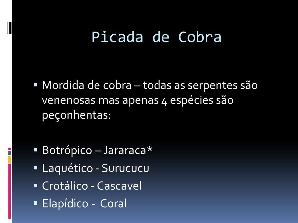 Picada de Cobra Mordida de cobra – todas as serpentes são venenosas mas apenas 4 espécies são peçonhentas: