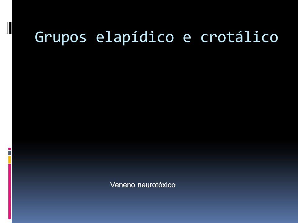 Grupos elapídico e crotálico