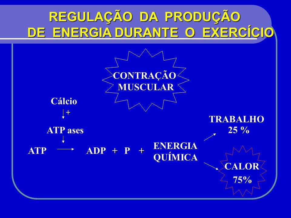 DE ENERGIA DURANTE O EXERCÍCIO