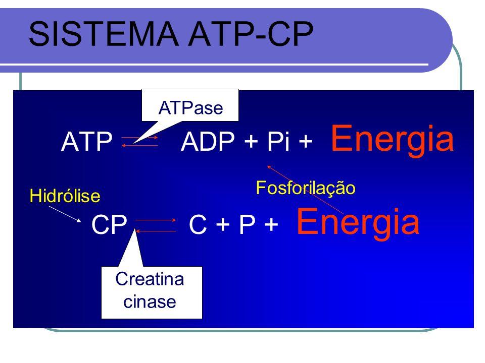 SISTEMA ATP-CP ATP ADP + Pi + Energia CP C + P + Energia ATPase