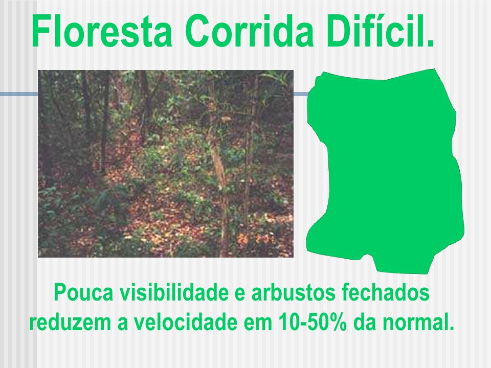 Floresta Corrida Difícil.
