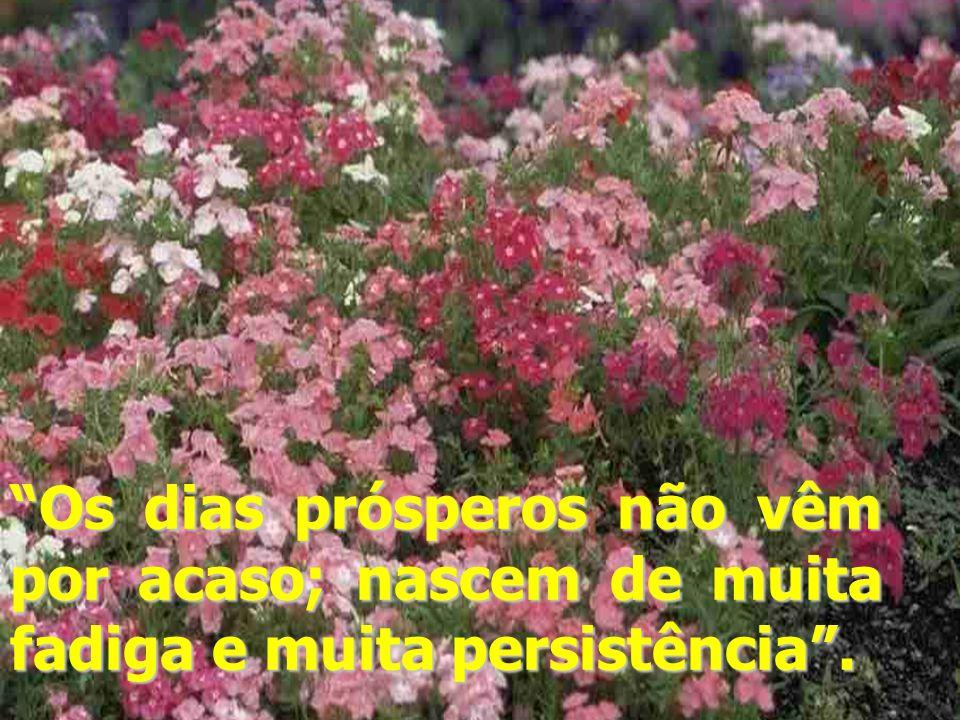 Os dias prósperos não vêm por acaso; nascem de muita fadiga e muita persistência .