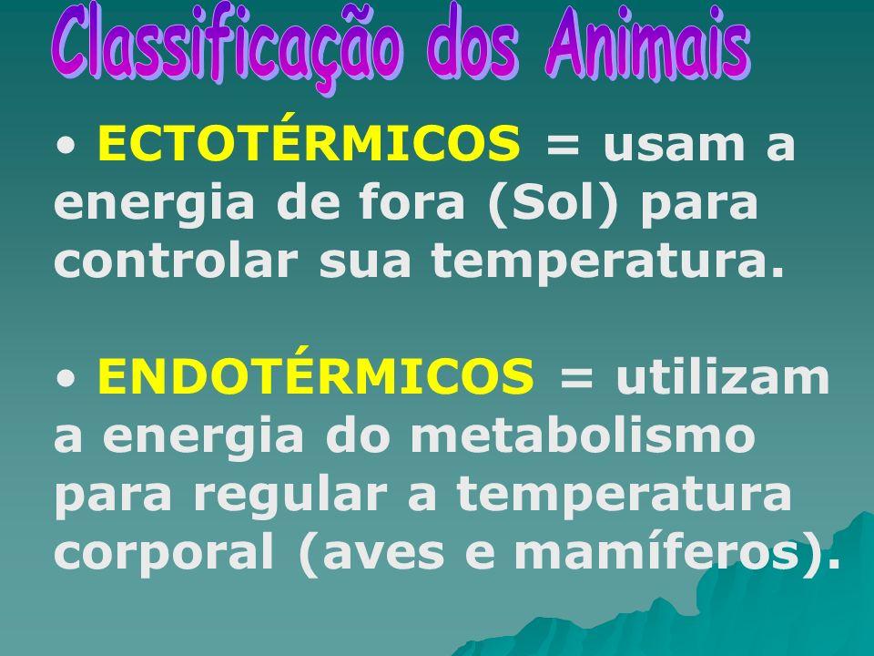 Classificação dos Animais