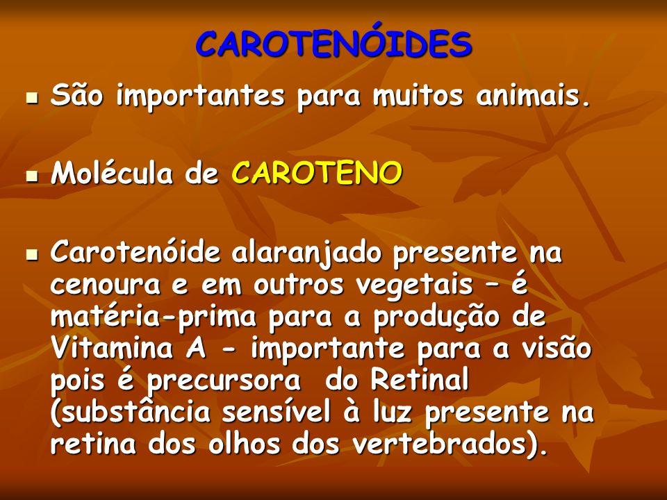 CAROTENÓIDES São importantes para muitos animais. Molécula de CAROTENO