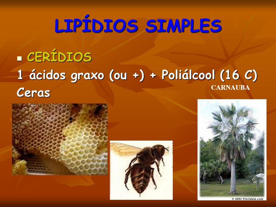 LIPÍDIOS SIMPLES CERÍDIOS 1 ácidos graxo (ou +) + Poliálcool (16 C)