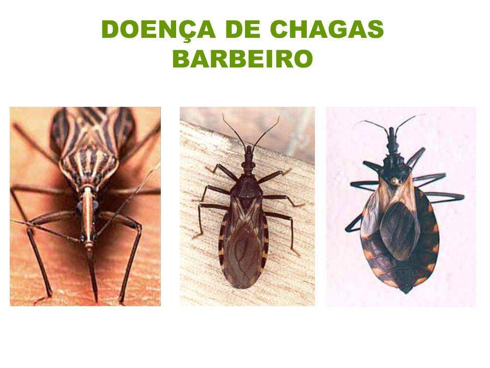 DOENÇA DE CHAGAS BARBEIRO