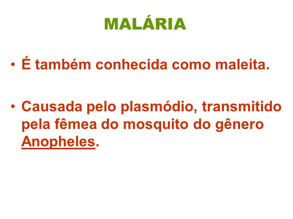 MALÁRIA É também conhecida como maleita.