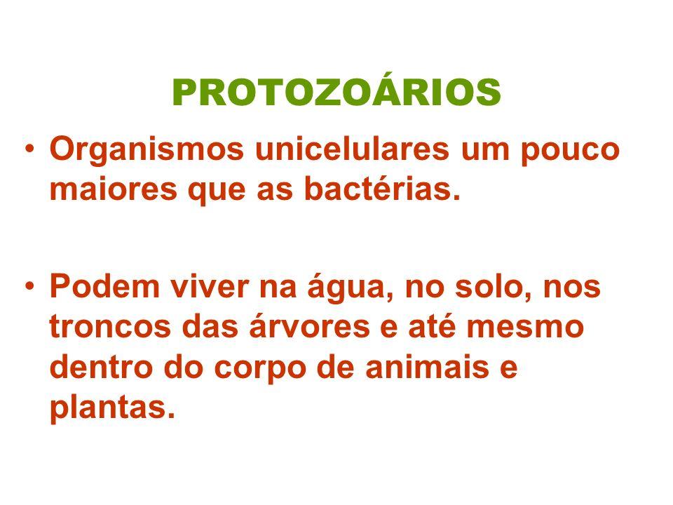PROTOZOÁRIOS Organismos unicelulares um pouco maiores que as bactérias.