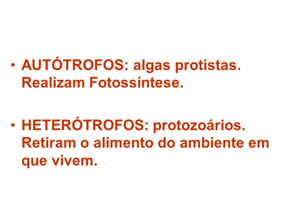 AUTÓTROFOS: algas protistas. Realizam Fotossíntese.