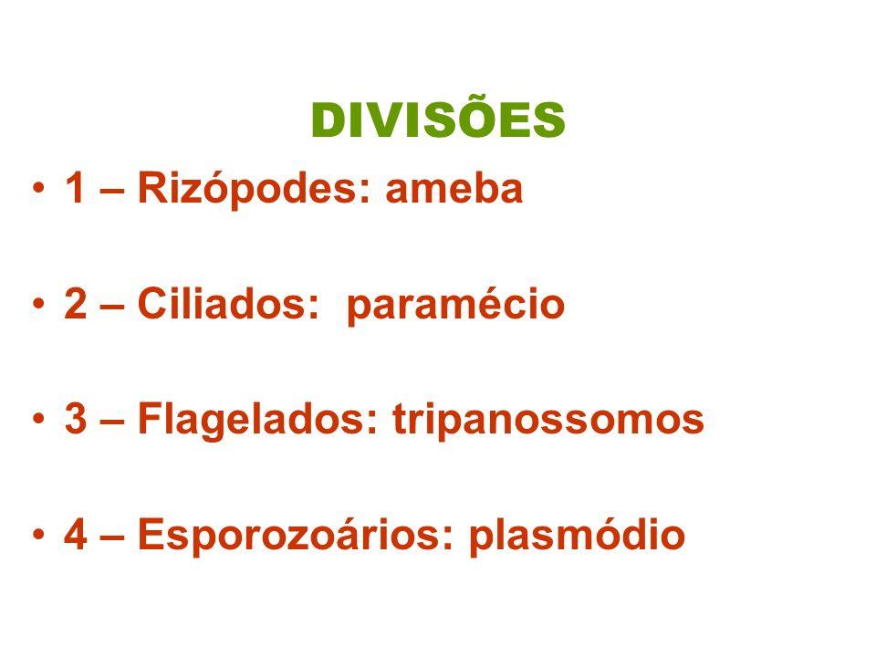 DIVISÕES 1 – Rizópodes: ameba 2 – Ciliados: paramécio