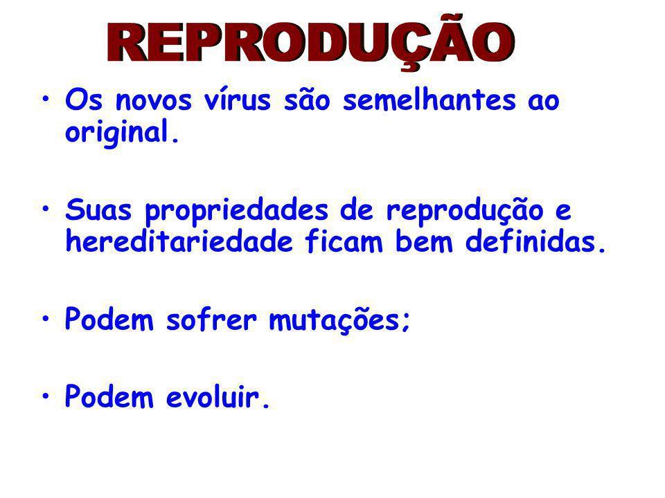 REPRODUÇÃO Os novos vírus são semelhantes ao original.