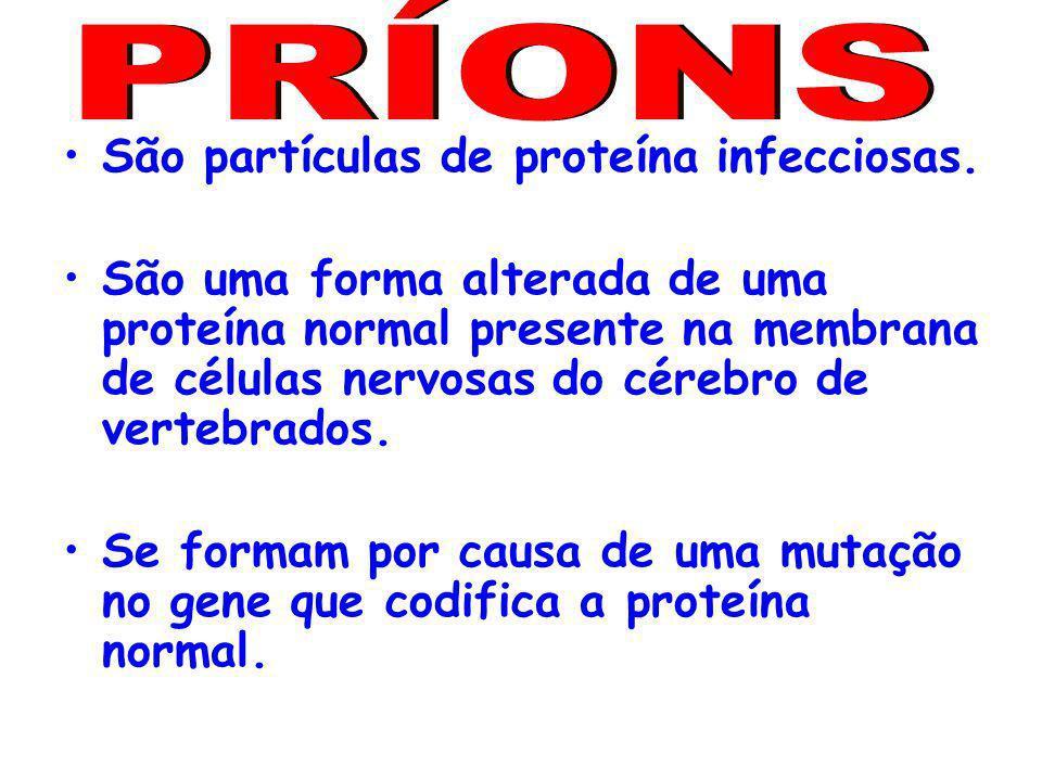 PRÍONS São partículas de proteína infecciosas.