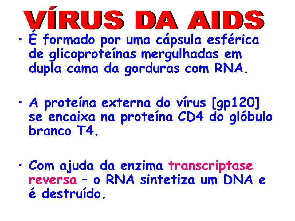 VÍRUS DA AIDS É formado por uma cápsula esférica de glicoproteínas mergulhadas em dupla cama da gorduras com RNA.