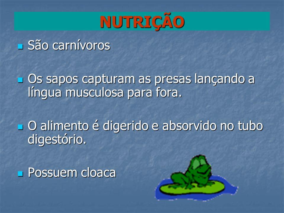 NUTRIÇÃO São carnívoros