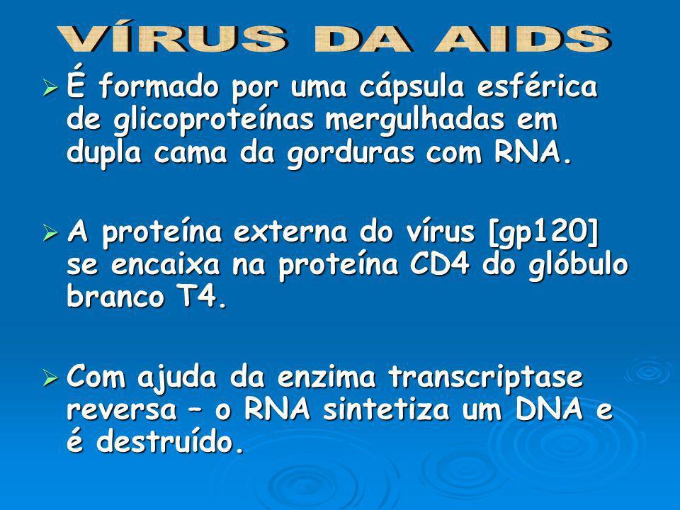 VÍRUS DA AIDSÉ formado por uma cápsula esférica de glicoproteínas mergulhadas em dupla cama da gorduras com RNA.
