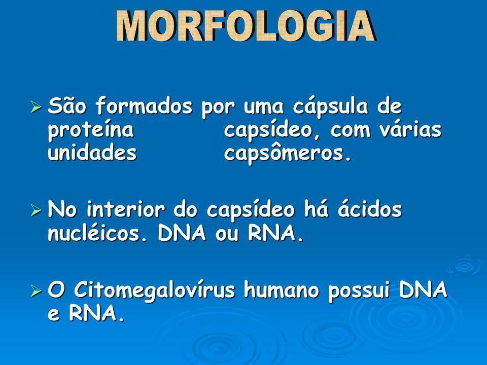 MORFOLOGIASão formados por uma cápsula de proteína capsídeo, com várias unidades capsômeros.
