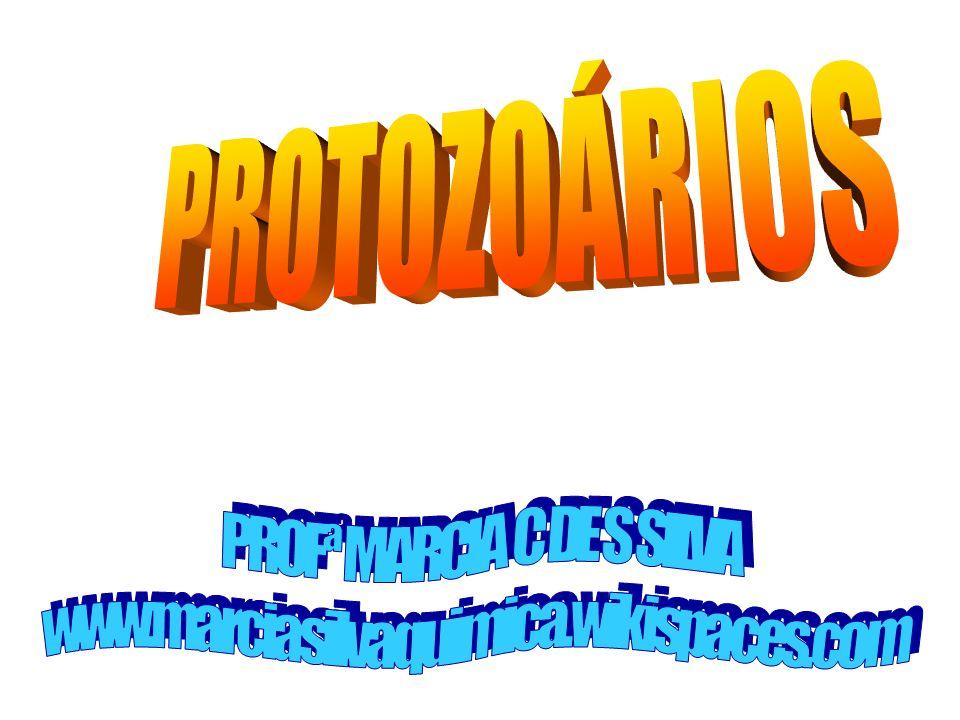 PROFª MARCIA C DE S SILVA