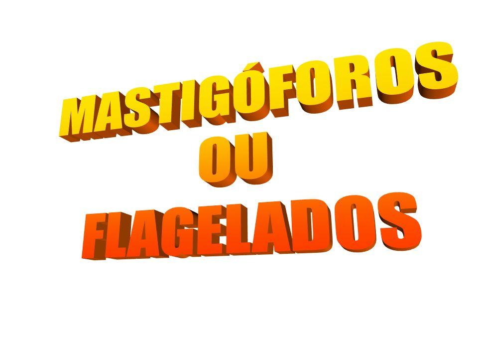 MASTIGÓFOROS OU FLAGELADOS