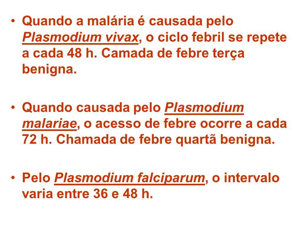 Quando a malária é causada pelo Plasmodium vivax, o ciclo febril se repete a cada 48 h. Camada de febre terça benigna.