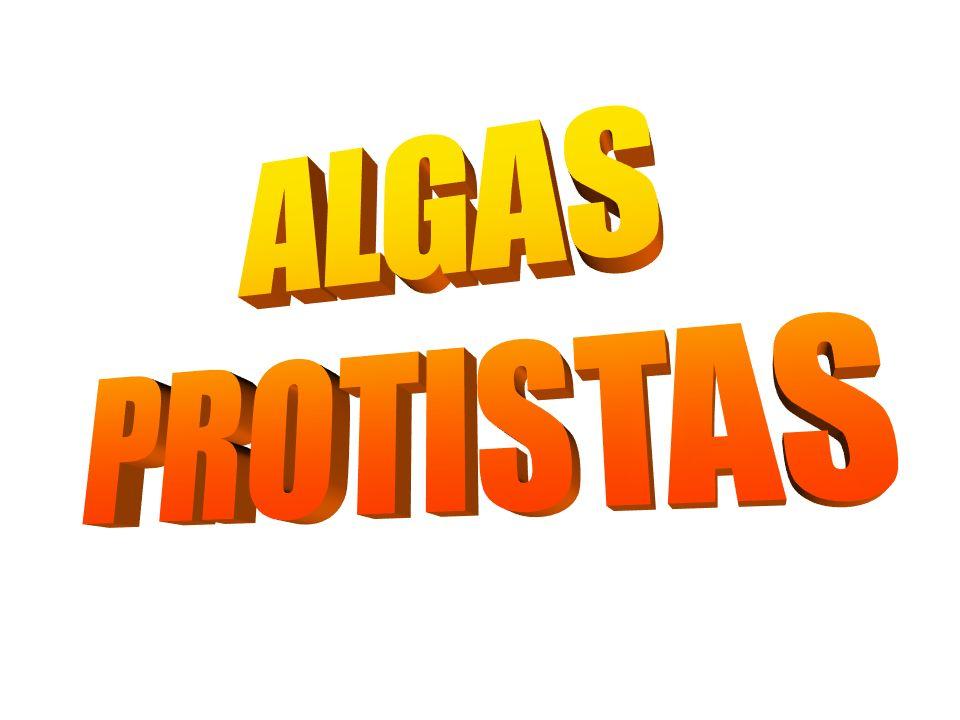 ALGAS PROTISTAS