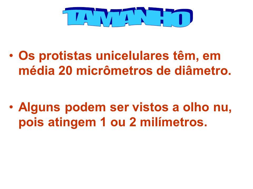 TAMANHO Os protistas unicelulares têm, em média 20 micrômetros de diâmetro.