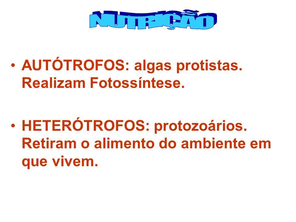 NUTRIÇÃO AUTÓTROFOS: algas protistas. Realizam Fotossíntese.