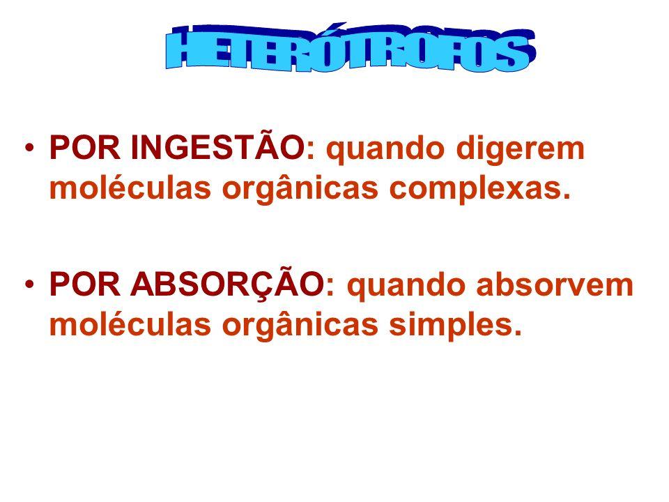 HETERÓTROFOS POR INGESTÃO: quando digerem moléculas orgânicas complexas.