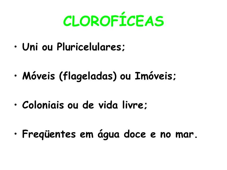 CLOROFÍCEAS Uni ou Pluricelulares; Móveis (flageladas) ou Imóveis;