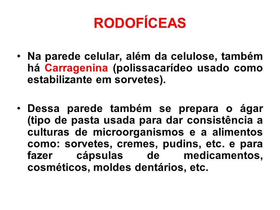 RODOFÍCEAS Na parede celular, além da celulose, também há Carragenina (polissacarídeo usado como estabilizante em sorvetes).