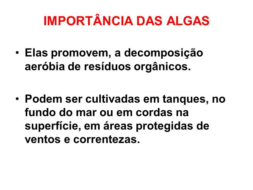IMPORTÂNCIA DAS ALGAS Elas promovem, a decomposição aeróbia de resíduos orgânicos.
