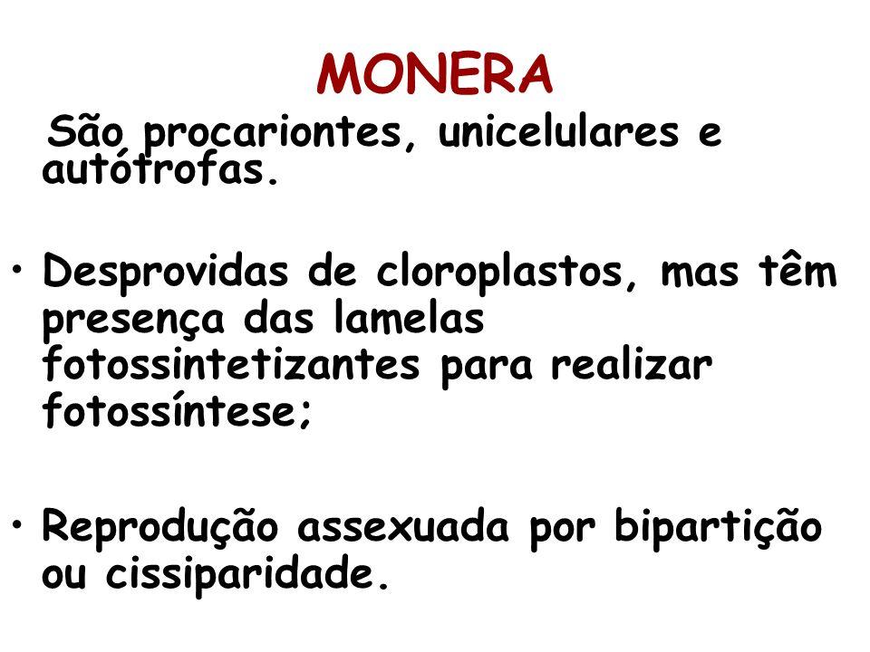 MONERA São procariontes, unicelulares e autótrofas.