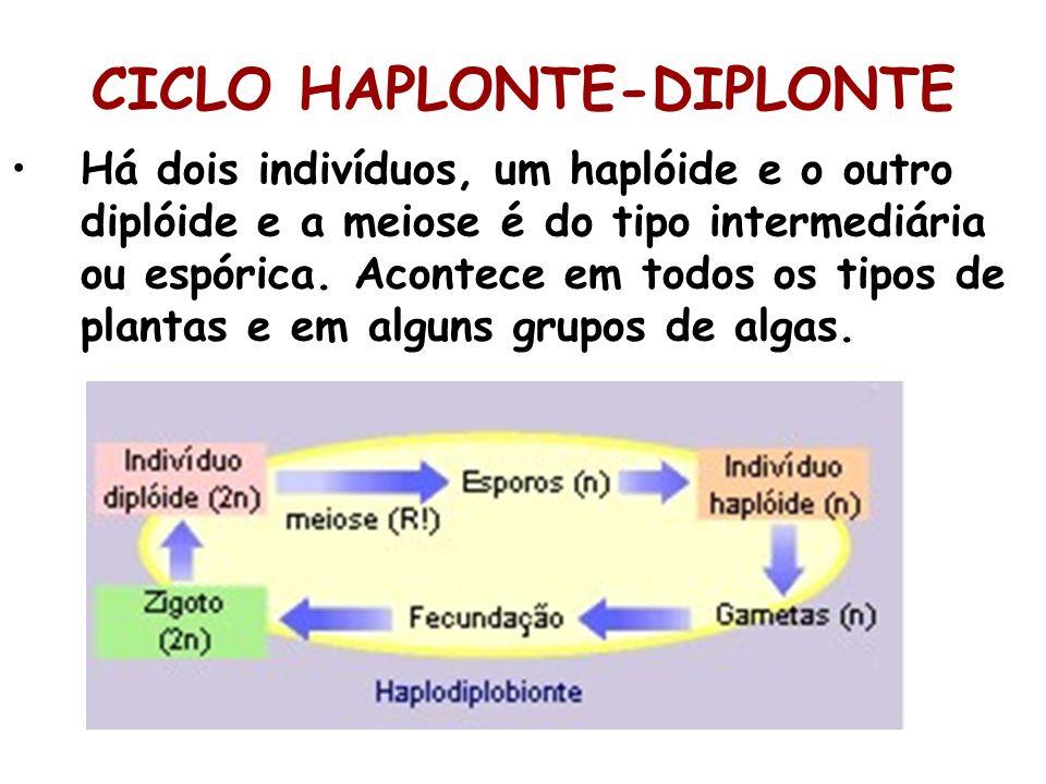 CICLO HAPLONTE-DIPLONTE