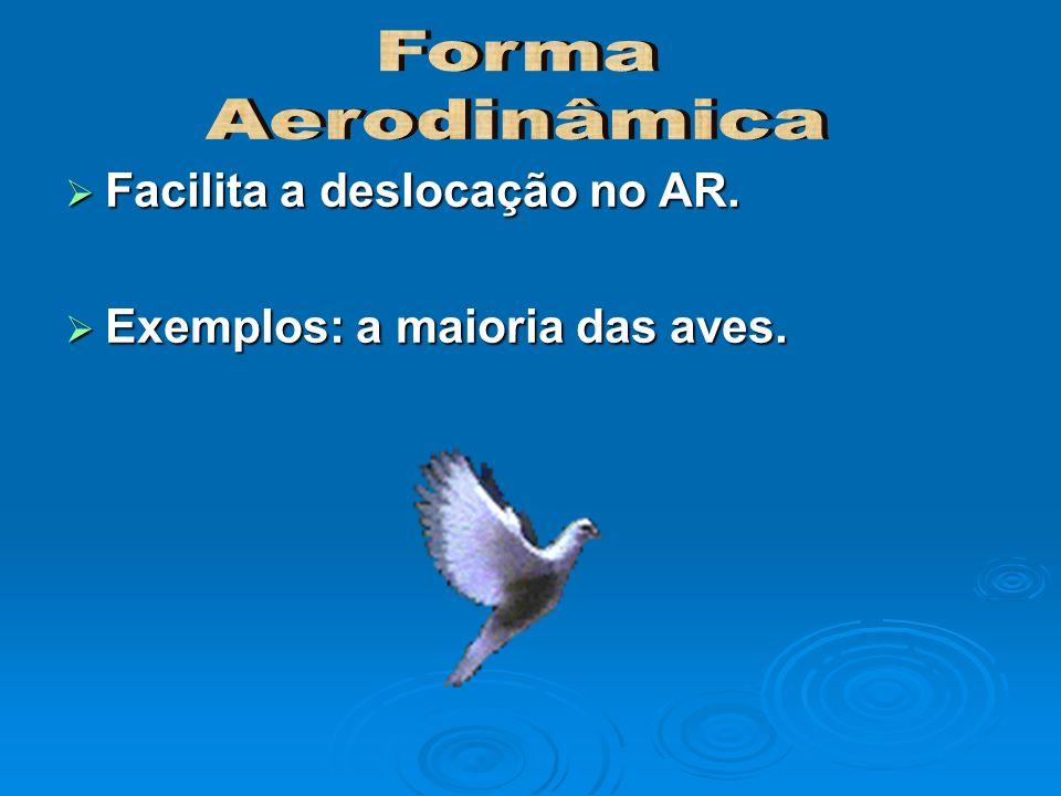 Forma Aerodinâmica Facilita a deslocação no AR.