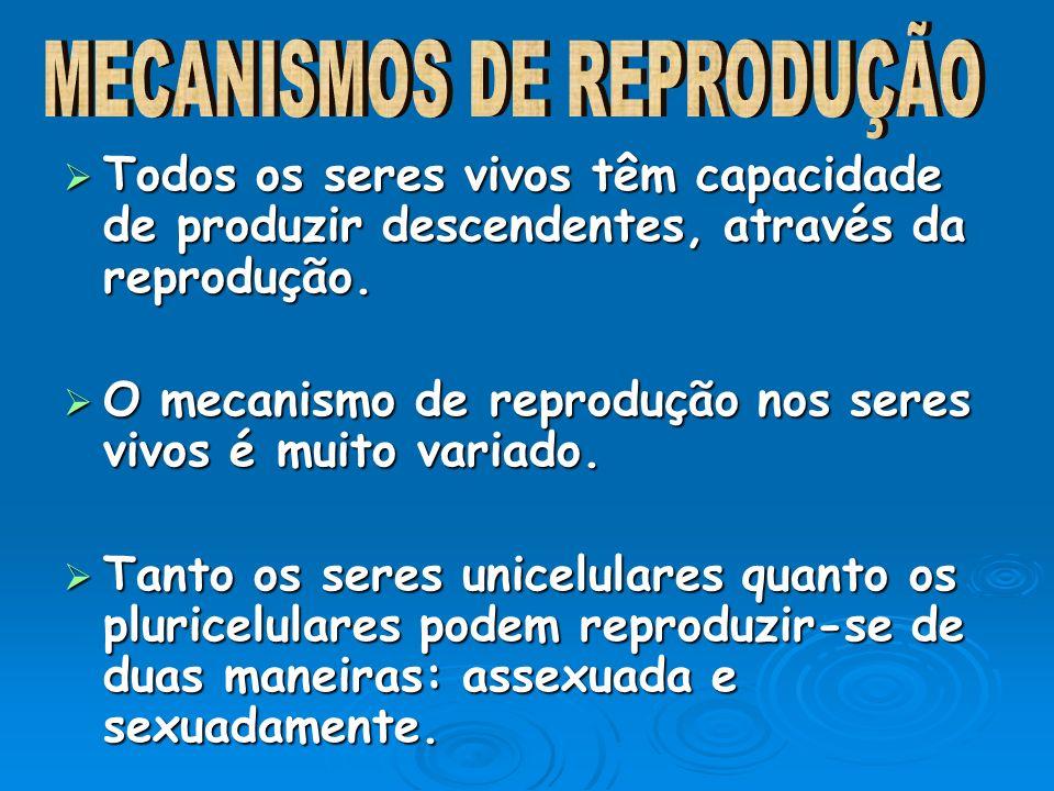 MECANISMOS DE REPRODUÇÃO