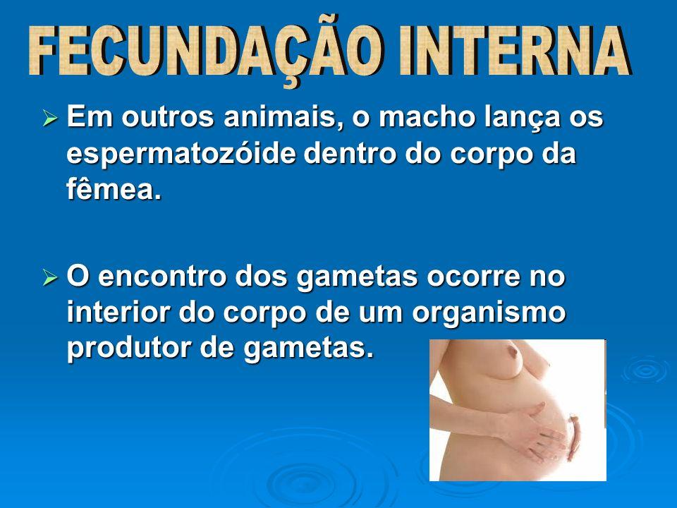FECUNDAÇÃO INTERNA Em outros animais, o macho lança os espermatozóide dentro do corpo da fêmea.