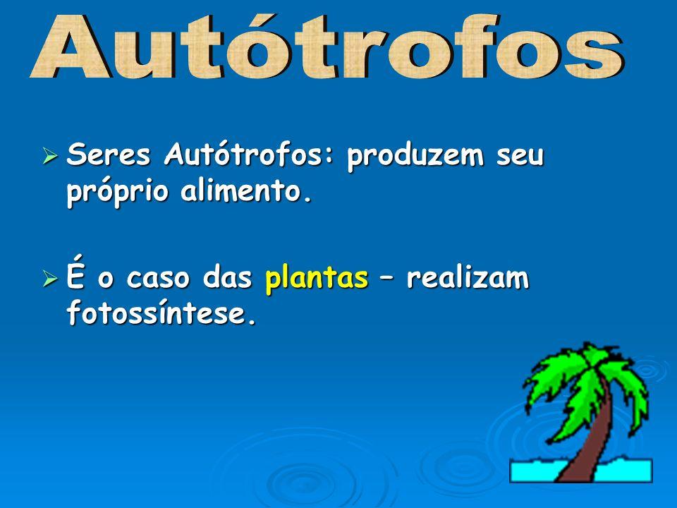 Autótrofos Seres Autótrofos: produzem seu próprio alimento.