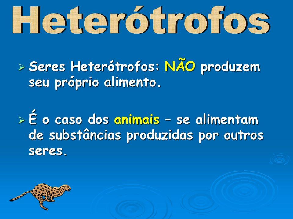Heterótrofos Seres Heterótrofos: NÃO produzem seu próprio alimento.