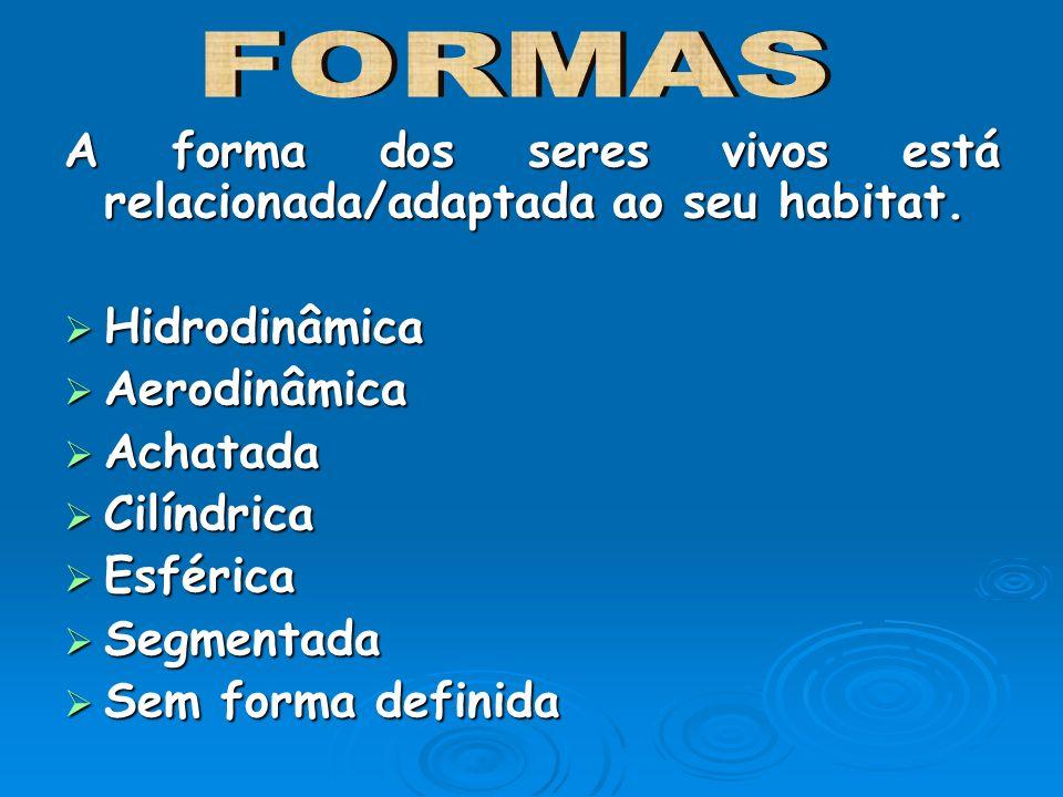 FORMAS A forma dos seres vivos está relacionada/adaptada ao seu habitat. Hidrodinâmica. Aerodinâmica.