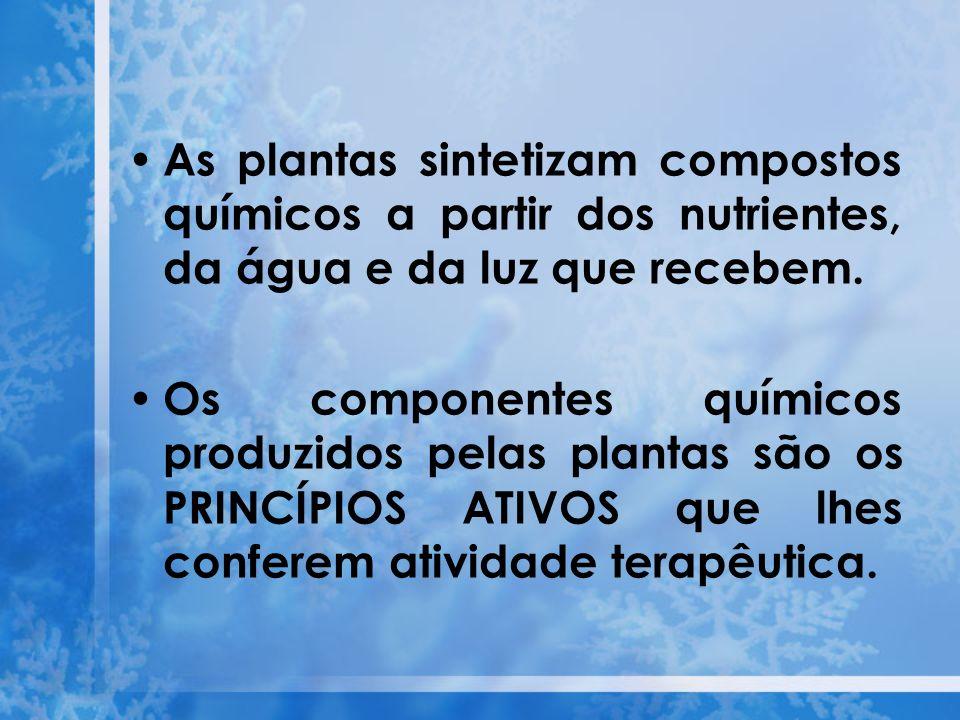 As plantas sintetizam compostos químicos a partir dos nutrientes, da água e da luz que recebem.