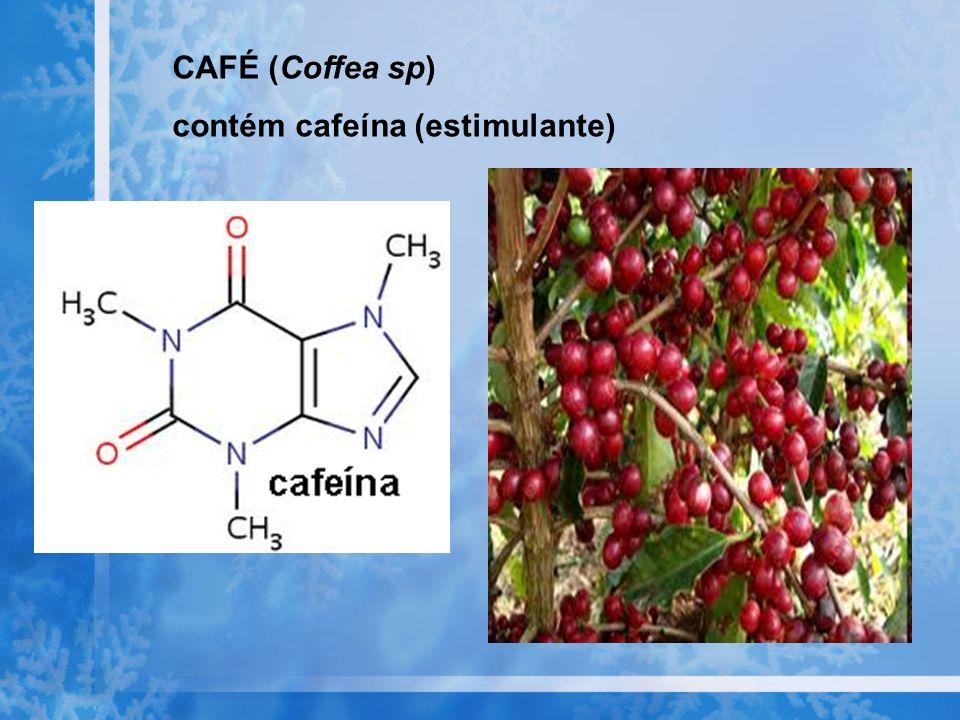CAFÉ (Coffea sp) contém cafeína (estimulante)