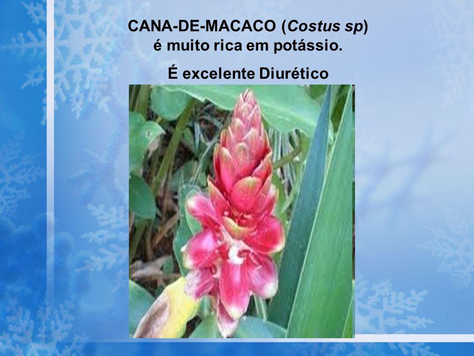 CANA-DE-MACACO (Costus sp) é muito rica em potássio.