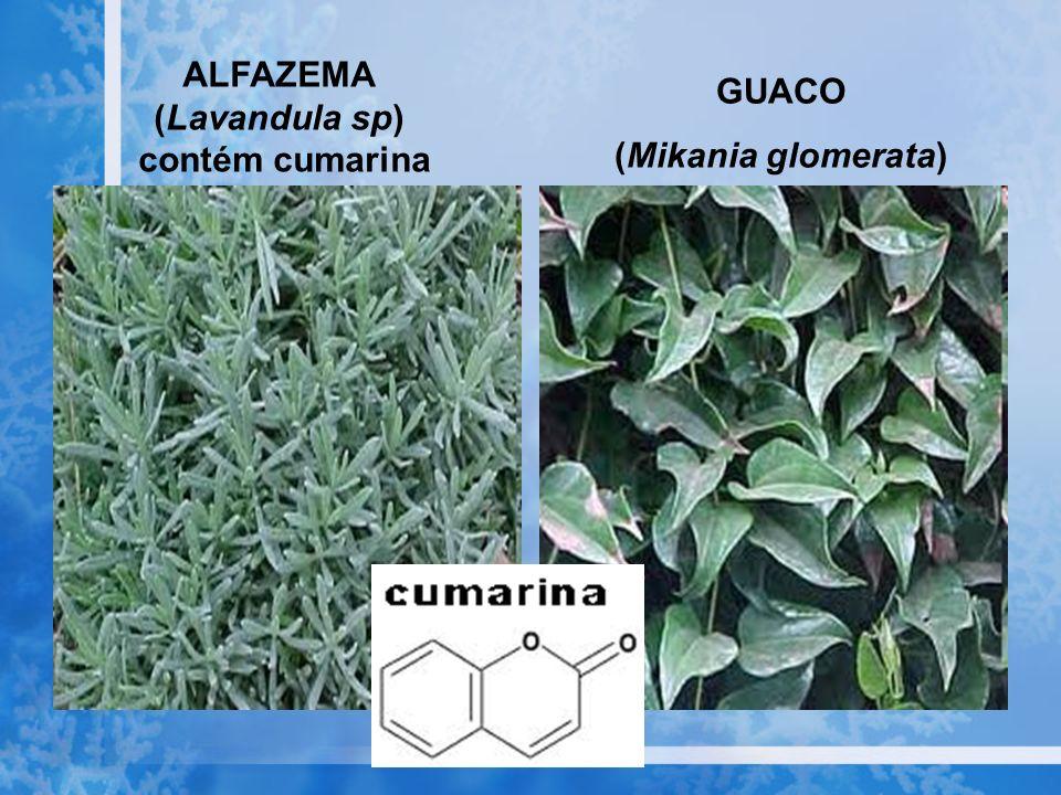 ALFAZEMA (Lavandula sp) contém cumarina GUACO (Mikania glomerata)
