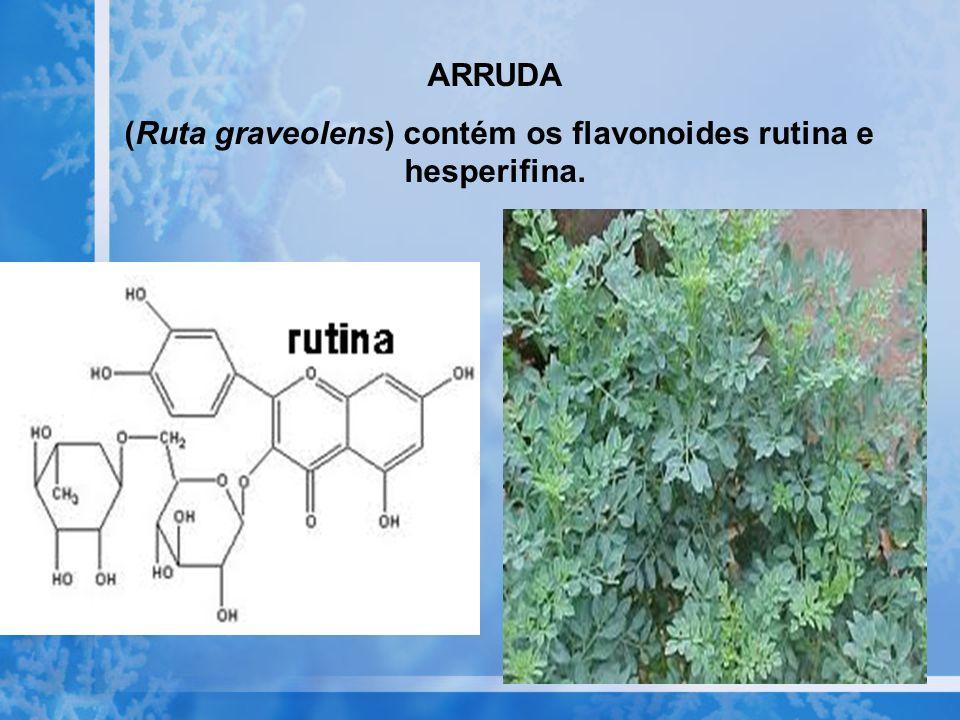(Ruta graveolens) contém os flavonoides rutina e hesperifina.