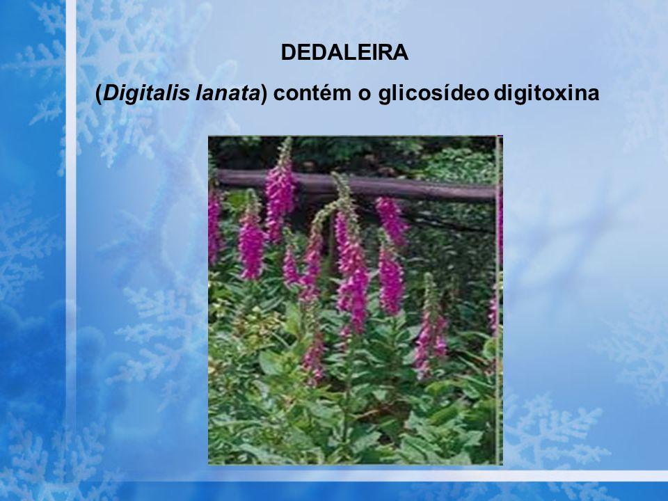 (Digitalis lanata) contém o glicosídeo digitoxina