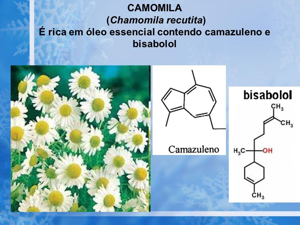 É rica em óleo essencial contendo camazuleno e bisabolol