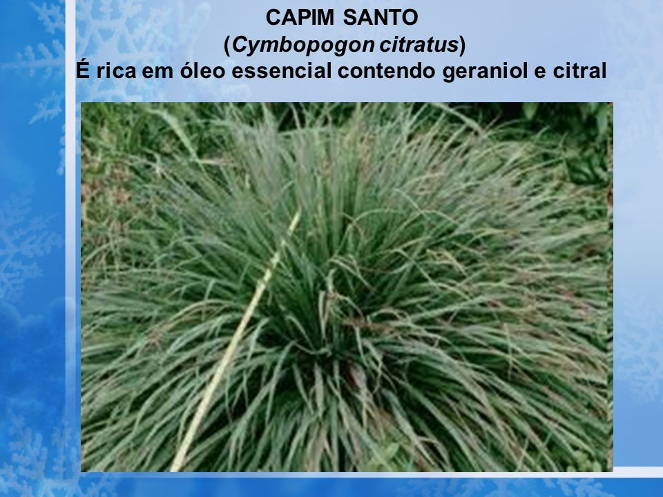 (Cymbopogon citratus)