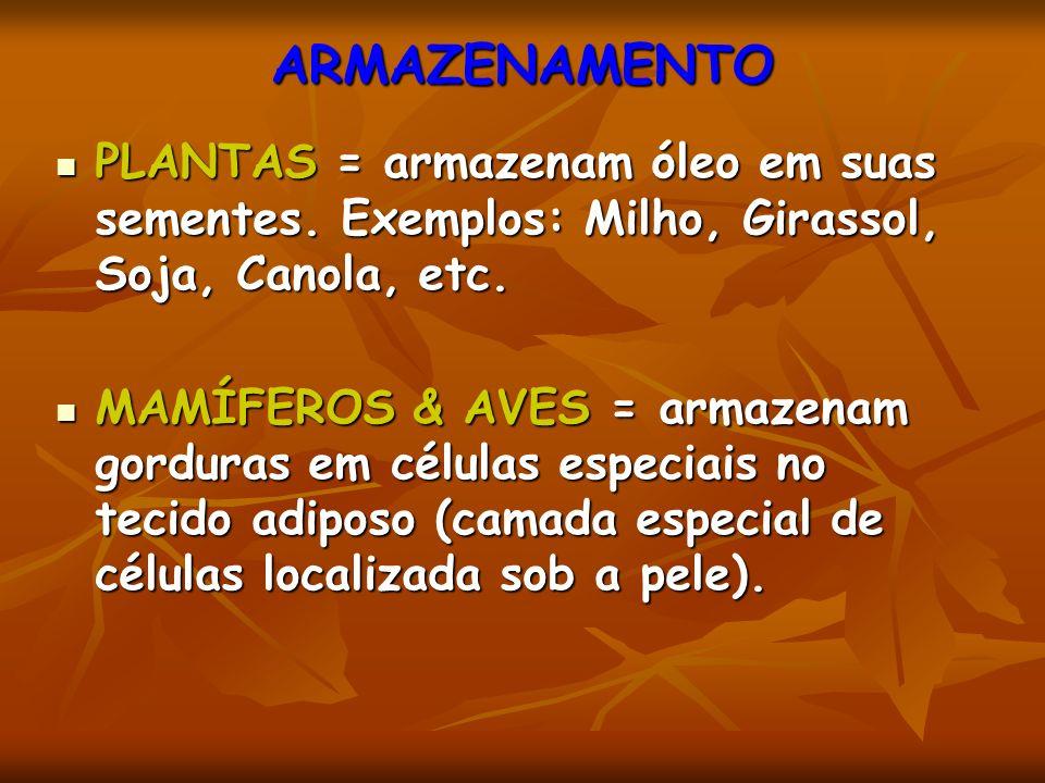ARMAZENAMENTO PLANTAS = armazenam óleo em suas sementes. Exemplos: Milho, Girassol, Soja, Canola, etc.
